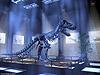 Fondos de Dinosaurios