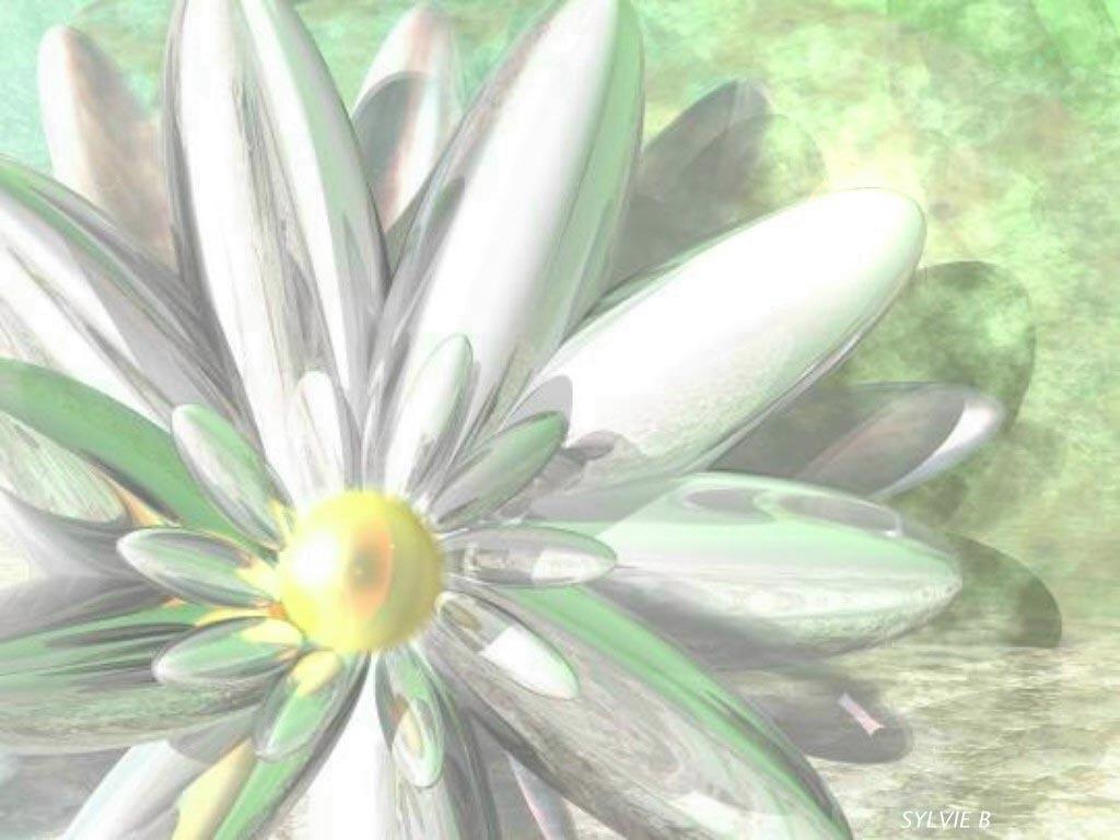 Fondos - Flores y Plantas